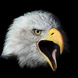 Eaglehead.jpg