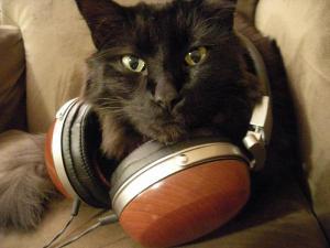 d2000 cat wears lawton audio woody