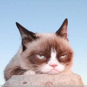 Grumpy Cat thinking...