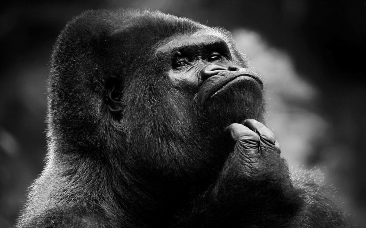 gorilla-1440x900.jpg