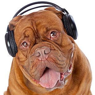 dog-headphones-listening-to-music-18555541.jpg