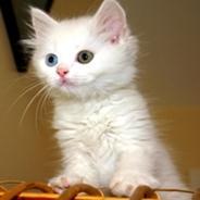 Cutest Cat Resize.jpg