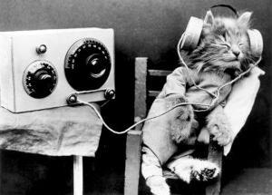 cat-wearing-headphones.jpg