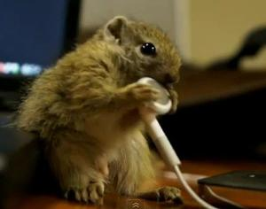 acb209dd_baby-squirrel-vs-apple-earphones.jpeg