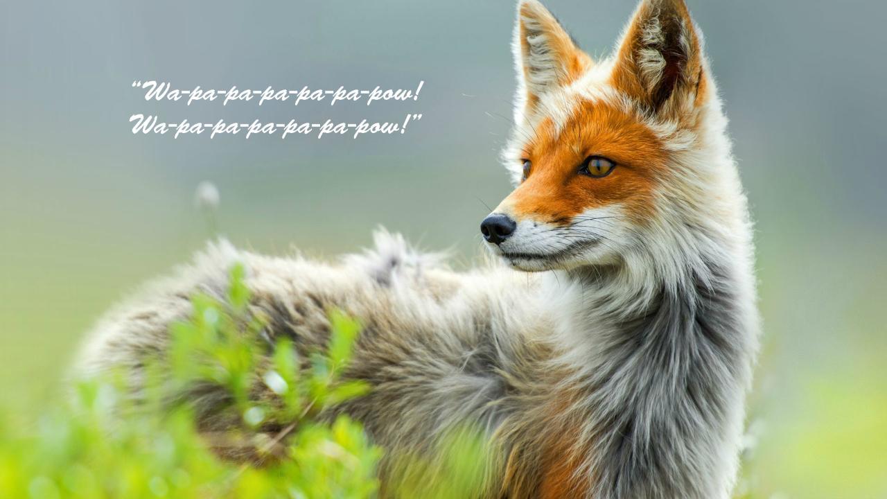 fox say background.jpg