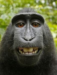 black macaque.jpg