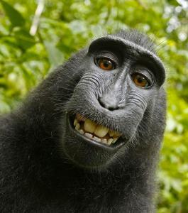black macaque 2.jpg
