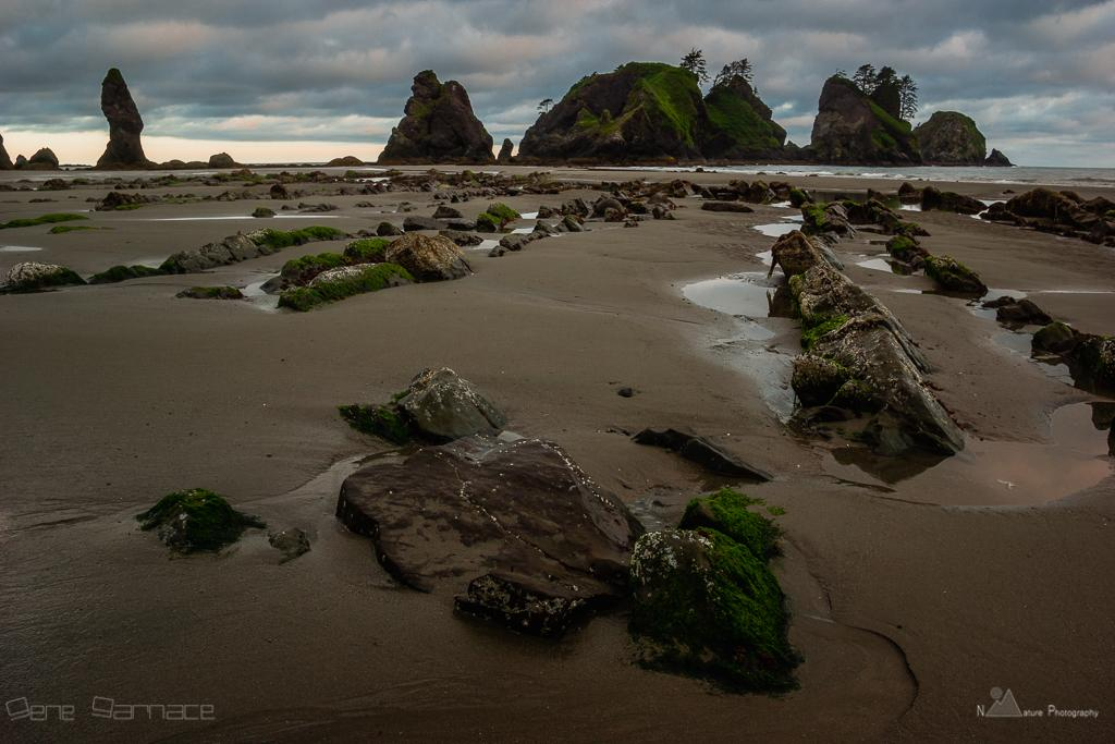 Pre-sunrise/low tide scene along Washington coast, Olympic NP, Washington