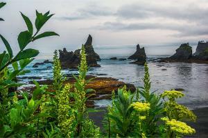 It's paradise out there ~ somewhere Washington coast|Olympic National Park