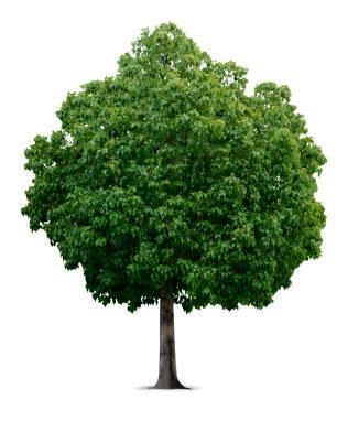tree-jpg.jpg