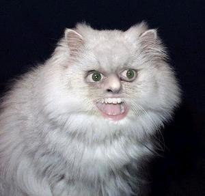 cat-human.jpg