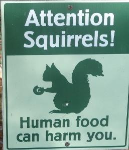 squirrels.jpg