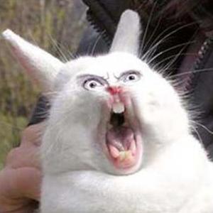 Scary Bunny.jpeg