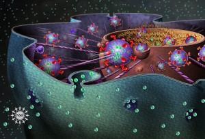 cell_nucleus-300x204.jpg