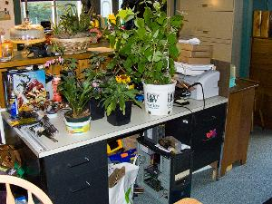 Desk with plants