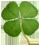 four_leaf_clover.png