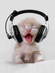 cat hp.jpg