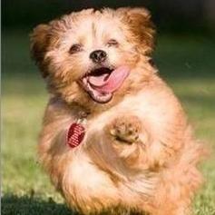 Pupp 1.jpg