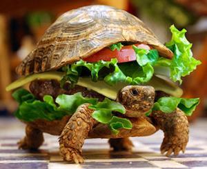 Tortoise-Burger.jpg