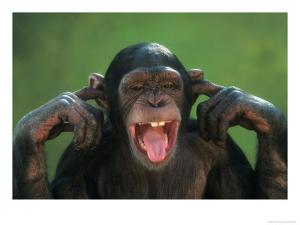 Chimpanzee-with-its-Fingers-in-its-Ears-Posters.jpg