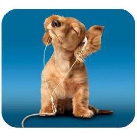 dog_with_headphones_1uft.jpg