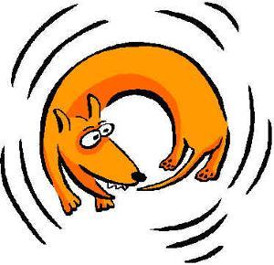 dog-chasing-tail-701516.jpg