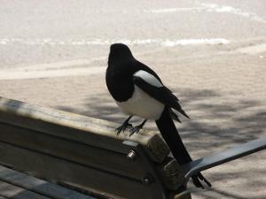 Birdy.jpg