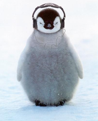 penguin_skullcandy.jpg