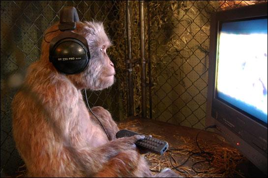 Beyerdynamics Monkey.jpg