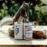 200x200px-ZC-be0daf5e_30039-squirrel0117.jpg