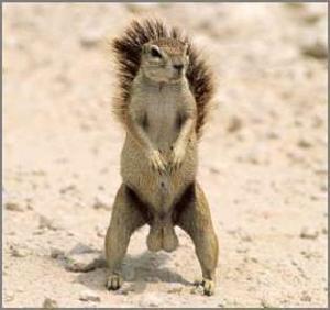 squirrel-nuts-1.jpg