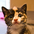 cat-avatar-headfi.png