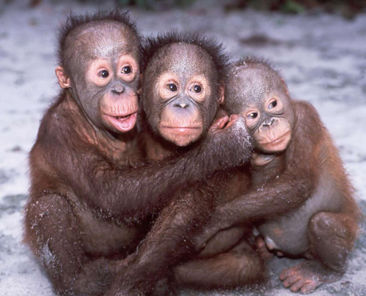 Фото смешных картинок три дивчели