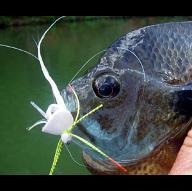 fishyee