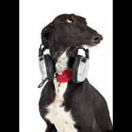greydogmusic