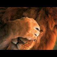 Lionman123