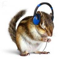 isquirrel