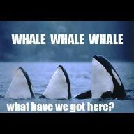 Whaleshark12