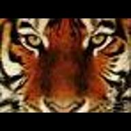 LSU_Tiger