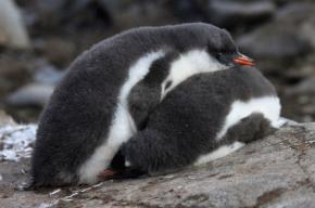 penguinofsleep2