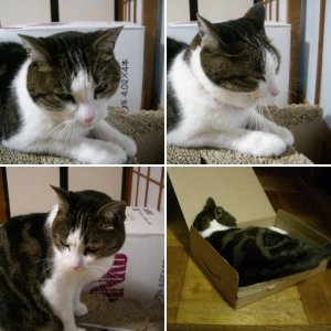 Neko (Cat)